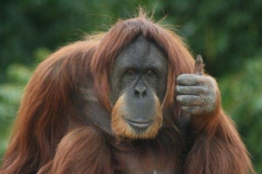 Problems with 'sustainable' palm oil and why All Naturals soaps and cosmetics are Palm Oil Free?